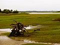 Pinckney Island National Wildlife Refuge (5958494866).jpg