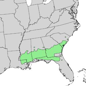 Pinus glabra - Image: Pinus glabra range map