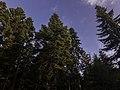 Planina Romanija - prirodne ljepote 13.jpg