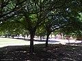 Plaza - panoramio (17).jpg