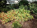 Poltava Botanical garden (05).jpg