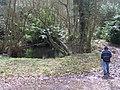 Pool in Westhide Wood - geograph.org.uk - 145681.jpg