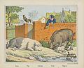 Porcs - Pigs - Schweine - Porgi. - Zwijnen.jpeg