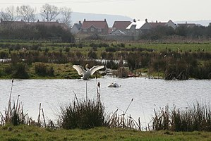 Portbury Ashlands - One of the ponds