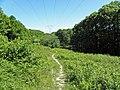 Près de la route des Fonds (Forêt de Montmorency) - panoramio.jpg