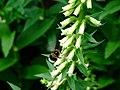 Praha, Trója, Botanická zahrada, opylování květiny.jpg