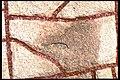 Rökstenen - KMB - 16000300014320.jpg