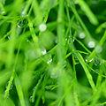 Raindrops close up.jpg