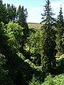 Ravine Near Leaplish Crag - geograph.org.uk - 204558.jpg