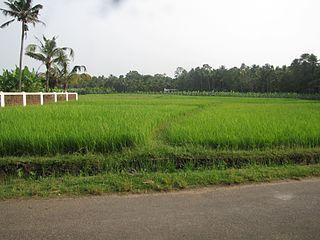 Rayamangalam village in Kerala, India