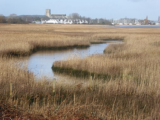 Reed beds in Wick Hams, part of Christchurch Harbour (geograph 5667842)