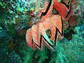 Reef0572 - Flickr - NOAA Photo Library.jpg