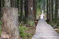 Rejviz trail.JPG