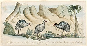 Arthur Bowes Smyth - Image: Representation of a Bird of the Coot kind, found at Lord Howe Island A604008h