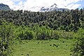 Reserva Villarrica 1.jpg