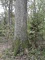 Rezerwat przyrody Dęby w Meszczach 11.21 01.jpg