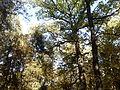 Rezerwat przyrody Dęby w Meszczach 12.46.jpg