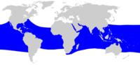 Rhincodon typus distmap.png