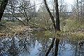 Riedgraben-ffm-riederwald001.jpg