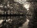 River Krka - panoramio.jpg