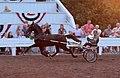 Roadster Horse (7714708304).jpg