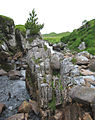 Rock spike in gorge by Eas Mor - geograph.org.uk - 200418.jpg