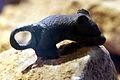 Roman bronze mouse IMG 4372.JPG