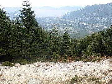 Roudi forest.jpg