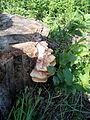 Sírovec žlutooranžový na pařezu topolu.JPG