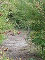 Sains-en-Gohelle - Fosse n° 10 - 10 bis des mines de Béthune, puits n° 10 (F).JPG