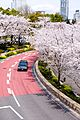 Sakura in Tokyo 2014 (13580600484).jpg
