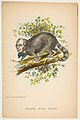 Same Old Coon (Henry Clay), from The Comic Natural History of the Human Race MET DP813070.jpg