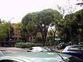 San Juan Bautista, 28043 Madrid, Spain - panoramio - Ricardo Ricote Rodrí… (5).jpg