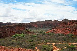 Lear's macaw - Sandstone cliffs in Bahia, Brazil