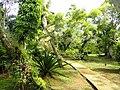 Sankyo Garden - DSC01210.JPG