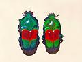 Scarabaeidae - Ischiopsopha jamesi.JPG