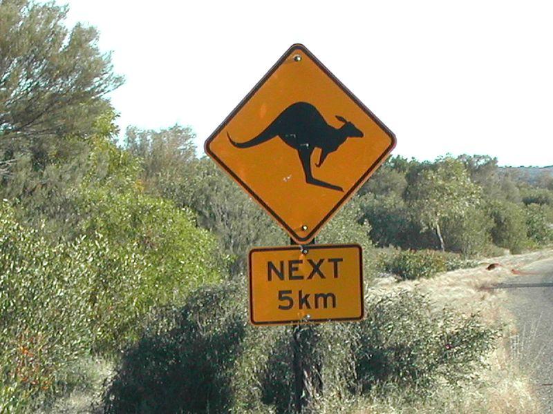 Muss hoffentlich nicht dem Klimaschutz zum Opfer fallen, sondern sollte zu mehr großen Klimasprüngen anregen: das Känguru. (Bild: Alexandra)