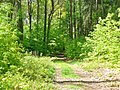 Schlosspark Wiesenburg (Wiesenburg Palace Park) - geo.hlipp.de - 36394.jpg