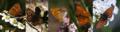 Schmetterlingsbild wikipedia urseetal.png