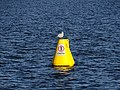 Seagull (36667227805).jpg
