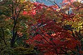 Seiryoji temple (8278701389).jpg
