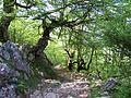 Senda del Arcediano ya en Amieva (Asturias). Parque Nacional Picos de Europa. ES1200001. ROSUROB.JPG