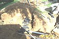 Septic Systems and Steep Slopes (21) (5097150775).jpg