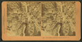 Seven Falls, Cheyenne Canyon, Col., U.S.A, from Robert N. Dennis collection of stereoscopic views.png
