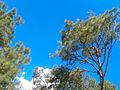 Shivapuri-Nagarjun National Park (3).jpg