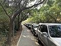 Sidewalk in National Tsing Hua University.jpg