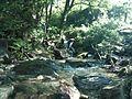 Sistema silvopastoril en cuenca alta del río Coapa, Pijijiapan, Chiapas 24.jpg