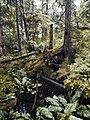 Sitka, Alaska (7708800360).jpg