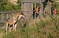 Skandinavisk dyrepark.jpg