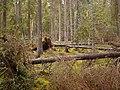Skograudbergene forest.jpg